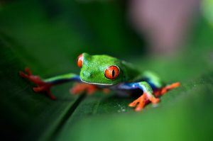 Frog Photography by HS Studio & co
